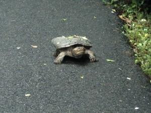 Guard Turtle