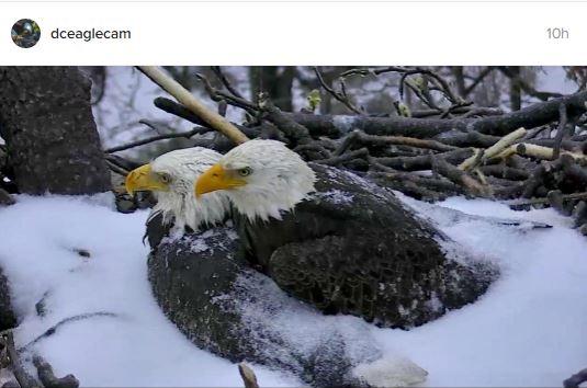 Arboretum eagles snowstorm